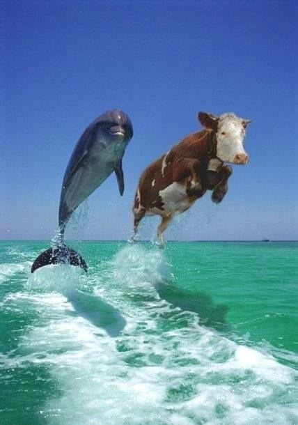 dolphins-cows-flying