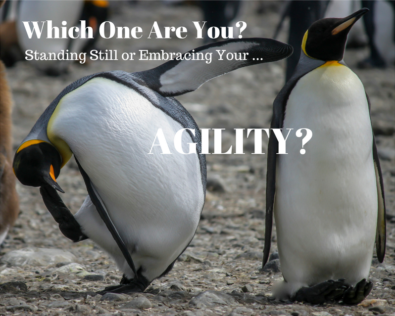 7 Simple Steps to Build Vital Flexibility into Your Company's DNA
